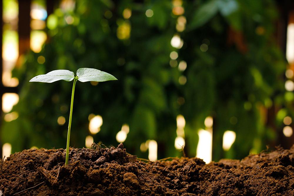 Kuvituskuva, jossa kasvintaimi nousee maasta.